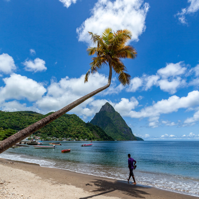 """Man walking under a lone palm on the beach at Soufriere with Petit Piton in..."" stock image"