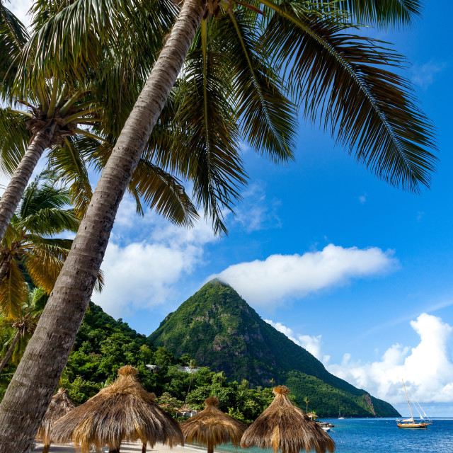 """Gros Piton, with palm trees and thatched sun umbrellas, Sugar Beach"" stock image"