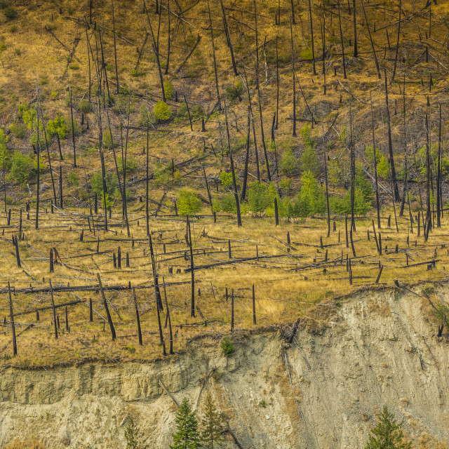 """View of barron land following recent fire near Kamloops, British Columbia,..."" stock image"