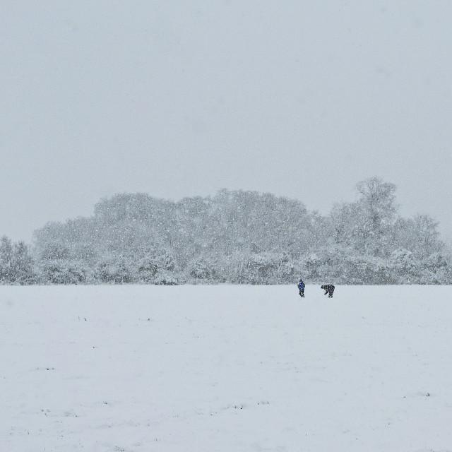 """Snowy field"" stock image"