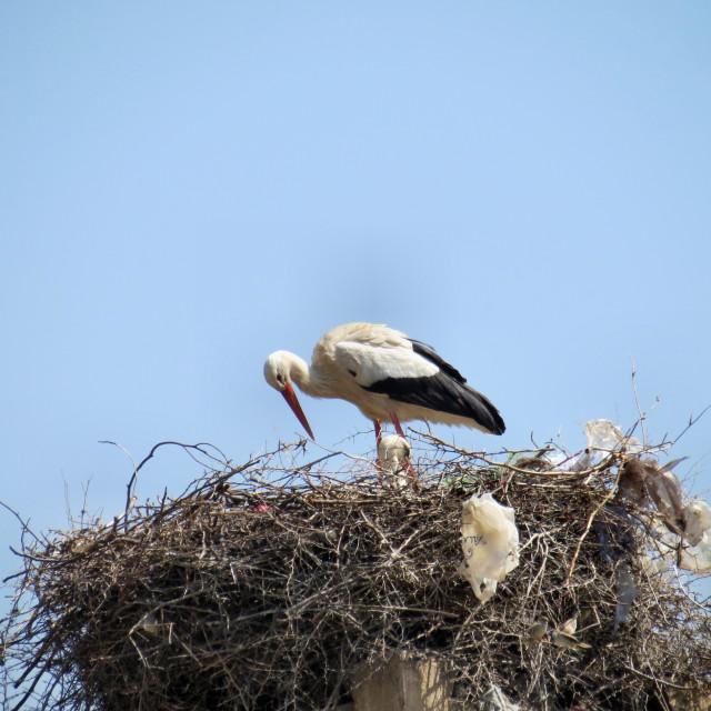 """""""Stork nesting"""" stock image"""