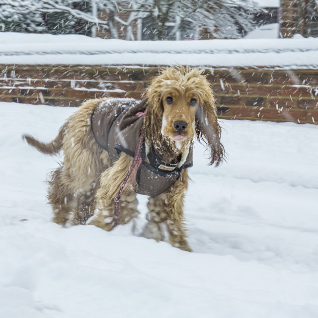 """""""Dog in the snow"""" stock image"""