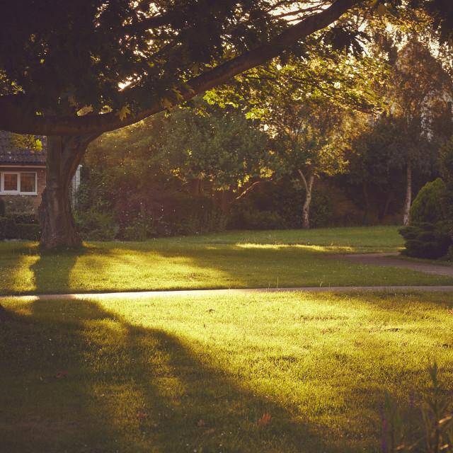 """""""Sun cast over a garden"""" stock image"""