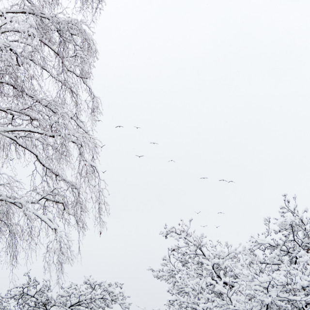 """""""Snow Covered"""" stock image"""