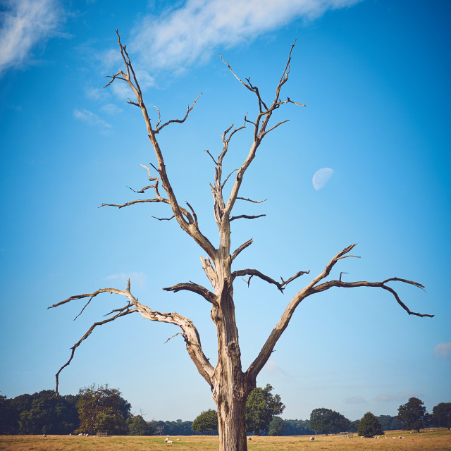 """""""Dry tree in a field"""" stock image"""