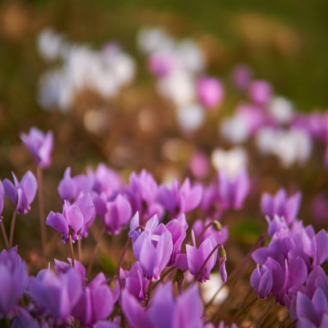 """little flowers"" stock image"