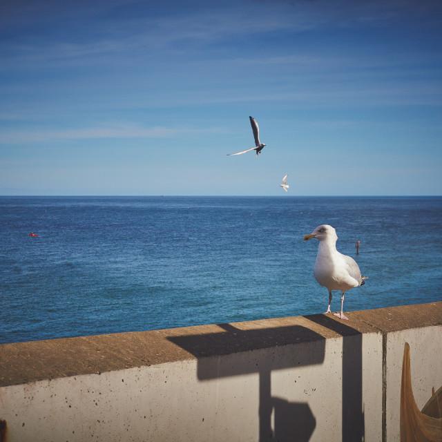 """Wall over the sea shore"" stock image"