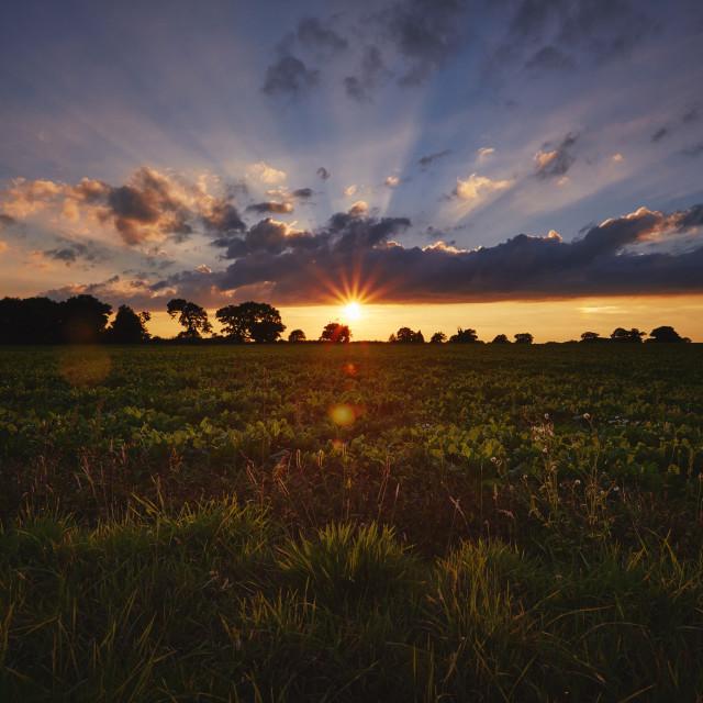 """Sunrise bursting over a field"" stock image"