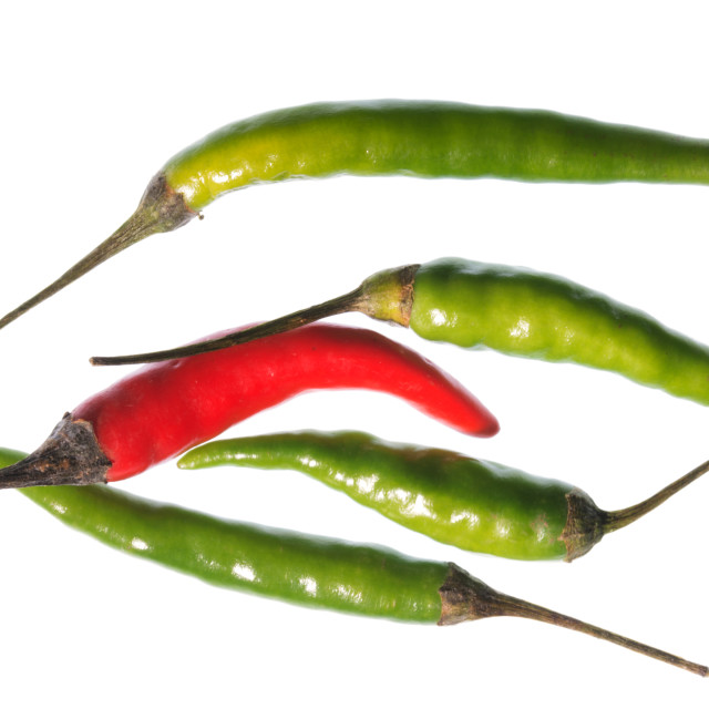 """Odd Chilli Out"" stock image"