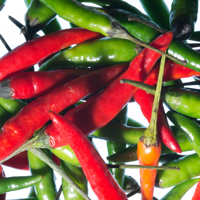 """Chilli Riot"" stock image"