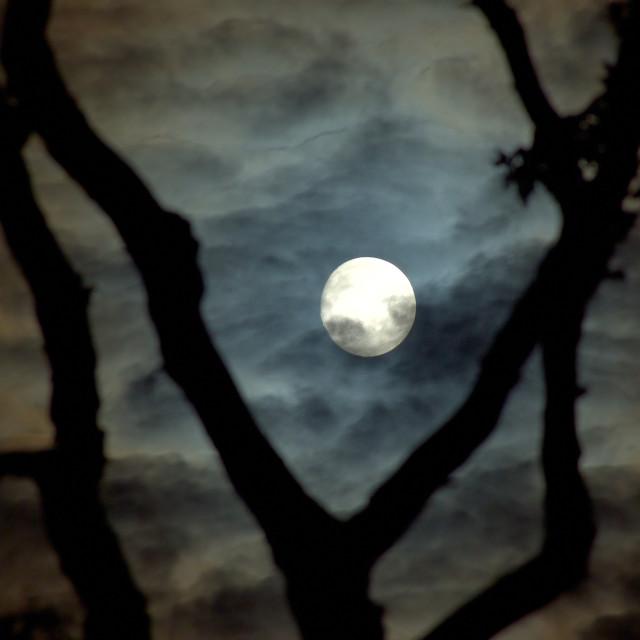 """Spooky Moon"" stock image"