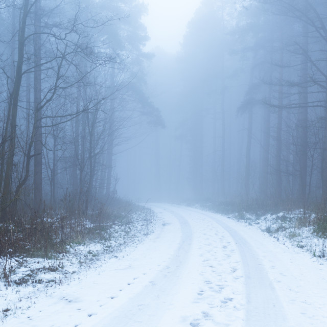 """Woodland forest track in Winter."" stock image"