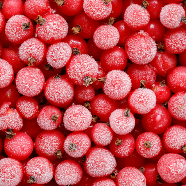 """Redcurrant berries"" stock image"