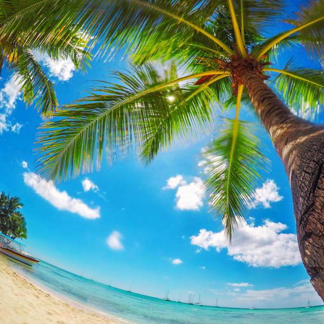 """Paradise beach on tropical islands. Saona Island, Dominican Rep"" stock image"