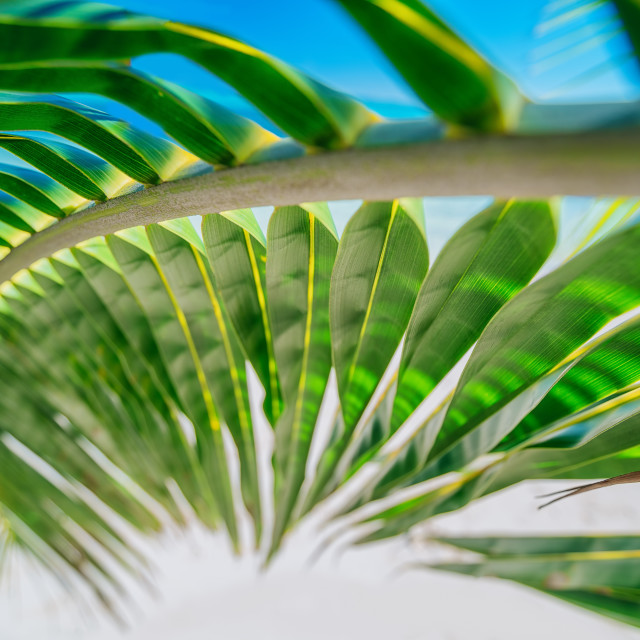 """""""Palm tree leaf and tropical island beach. Natural texture backgr"""" stock image"""