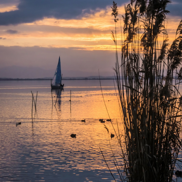 """Yacht sailing at sunset with reeds"" stock image"
