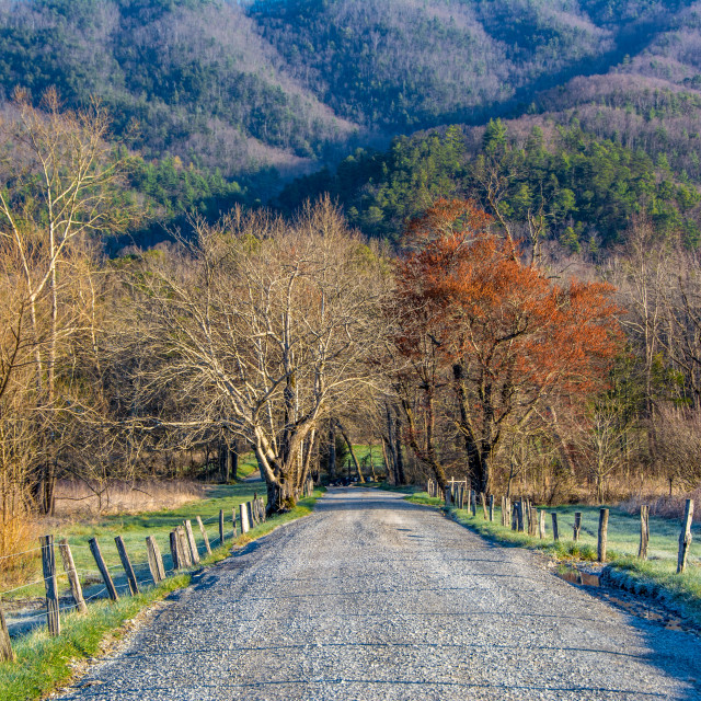 """""""Gravel Road, Great Smoky Mountains National Park"""" stock image"""