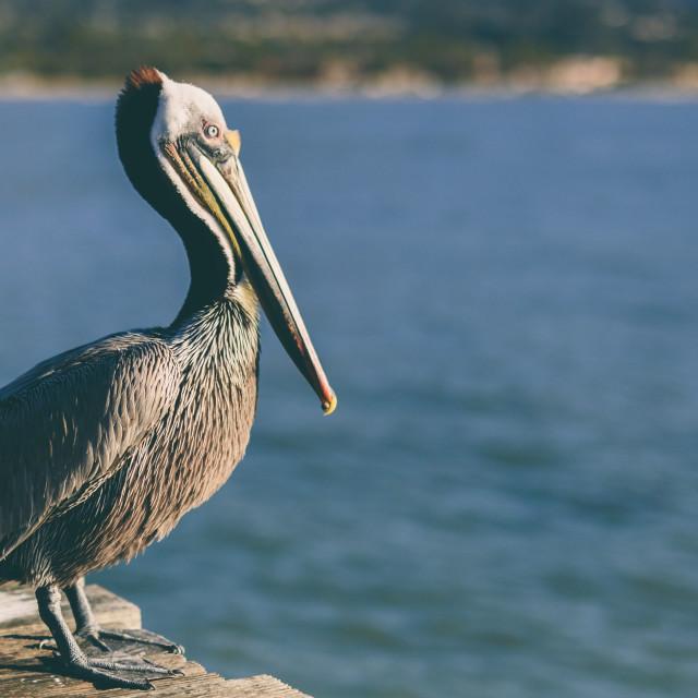 """Santa Barbara Pier"" stock image"