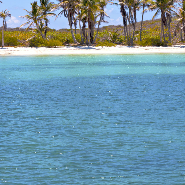 """""""isla contoy mexico froath and blue foam the"""" stock image"""