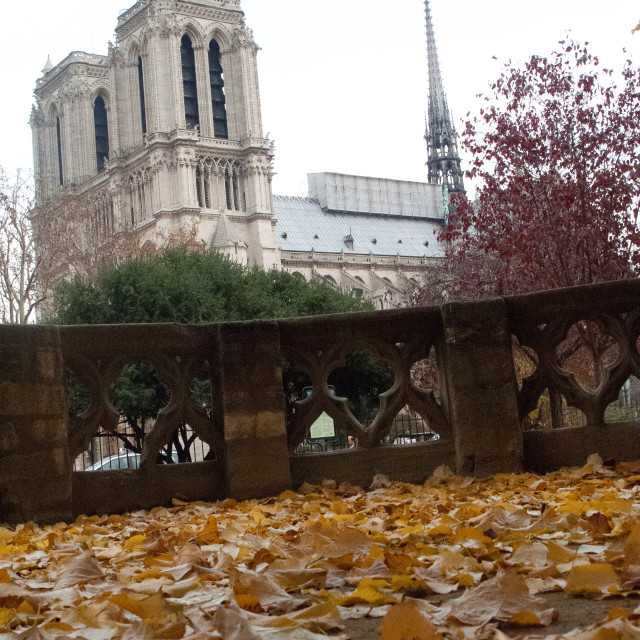 """""""Notra Dame Cathederal in Autumn leaves"""" stock image"""