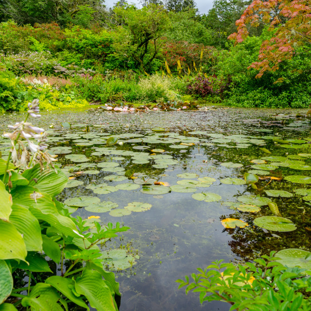"""Colorful Lily Pond"" stock image"
