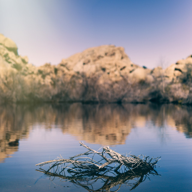 """Joshua Tree"" stock image"