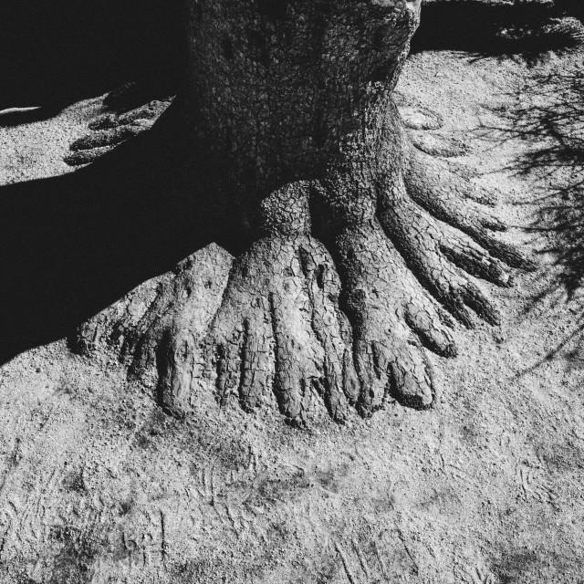"""""""Joshua Tree"""" stock image"""