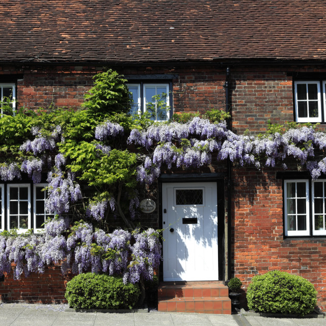 """""""Wisteria Cottage, Arundel town, Sussex, England, UK"""" stock image"""