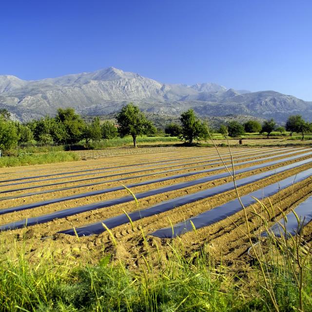 """""""Greek farming scene"""" stock image"""