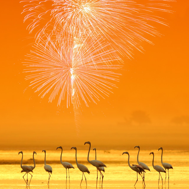 """Flamingos in The City"" stock image"