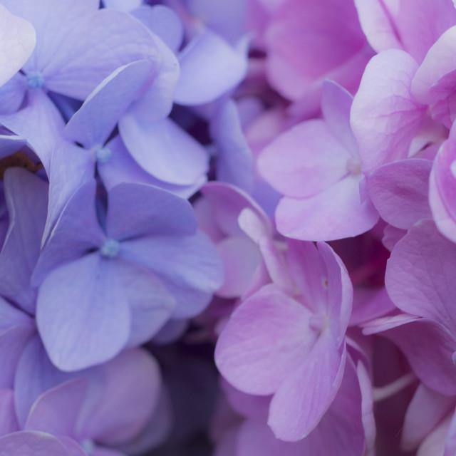 """Petals"" stock image"