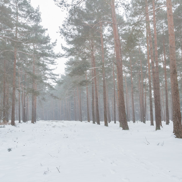 """""""Frith Hill in the snow"""" stock image"""
