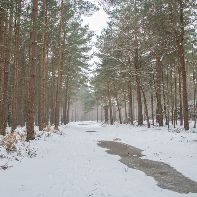 """""""Winter in the woods"""" stock image"""