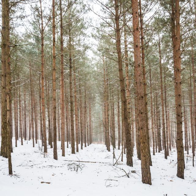 """snowlines"" stock image"