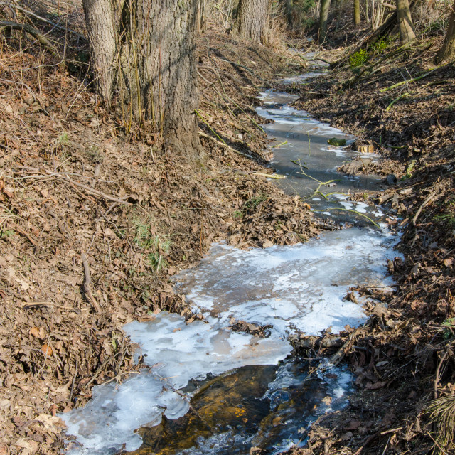 """""""Frozen stream in the forest"""" stock image"""