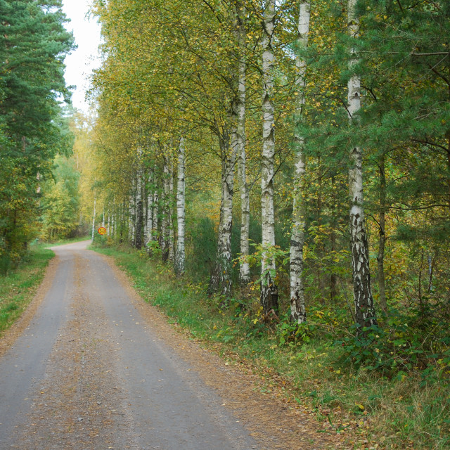 """Fall season colored dirt road"" stock image"