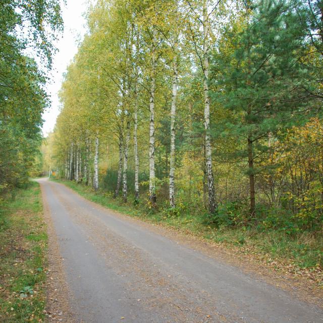 """""""Country road at fall season"""" stock image"""