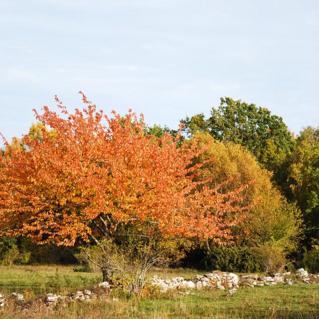 """Beautiful sparkling tree"" stock image"