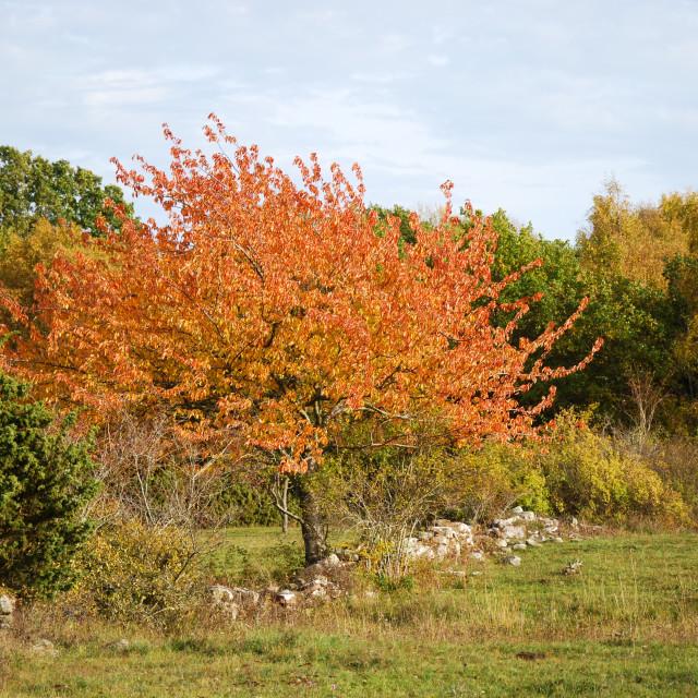 """""""Beautiful fall season colors"""" stock image"""