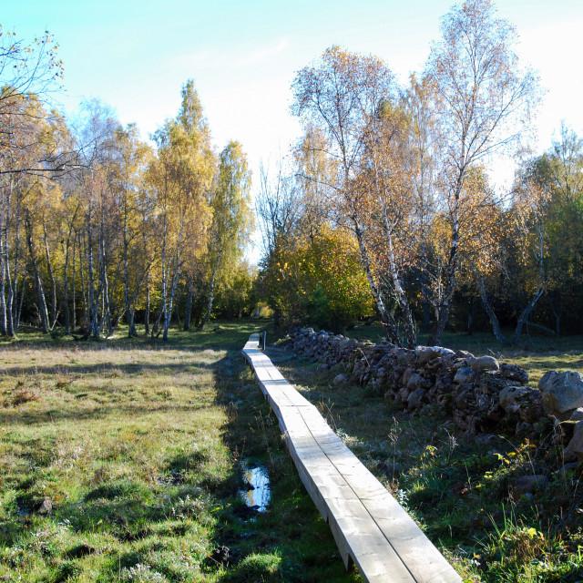 """Wooden footbridge at fall season"" stock image"