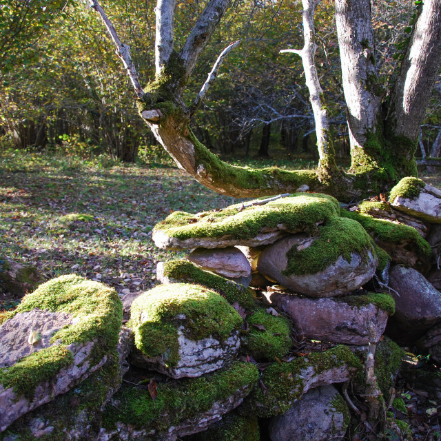 """""""Old moss covered stone wall"""" stock image"""