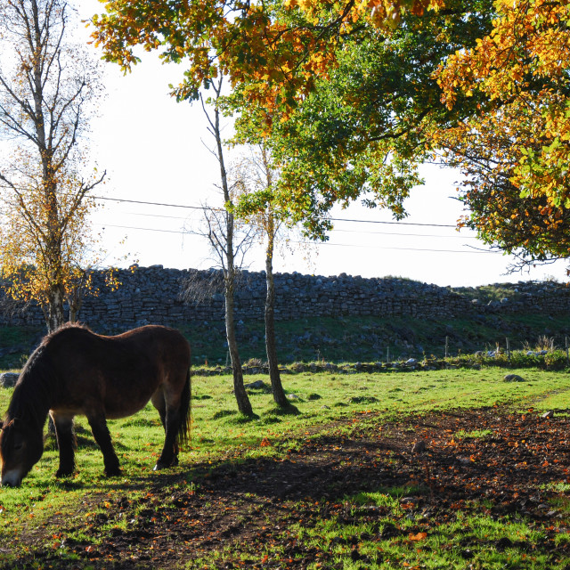 """""""Grazing horse in a colorful landscape"""" stock image"""