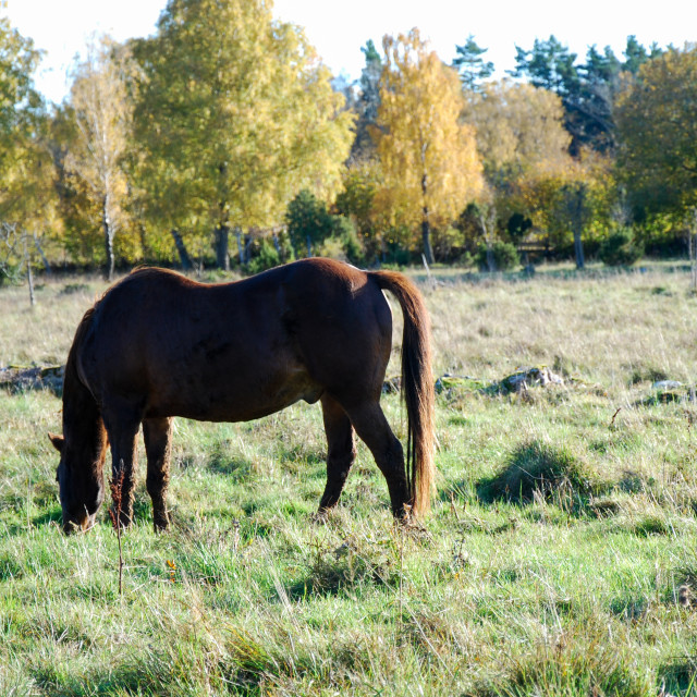 """""""Grazing horse in a colorful meadow"""" stock image"""
