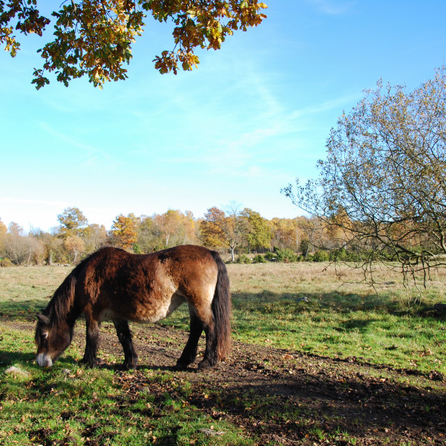 """""""Peaceful view of a grazing horse"""" stock image"""