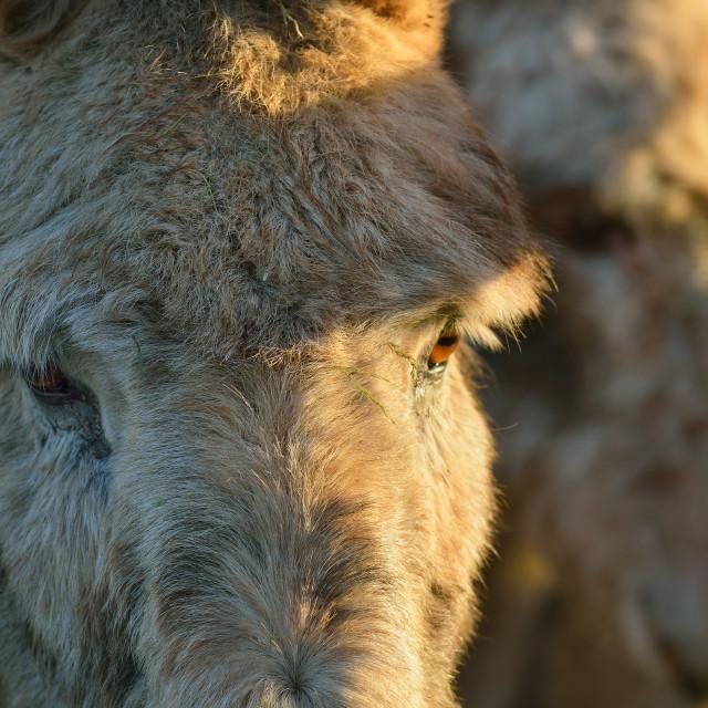 """""""Donkeys"""" stock image"""