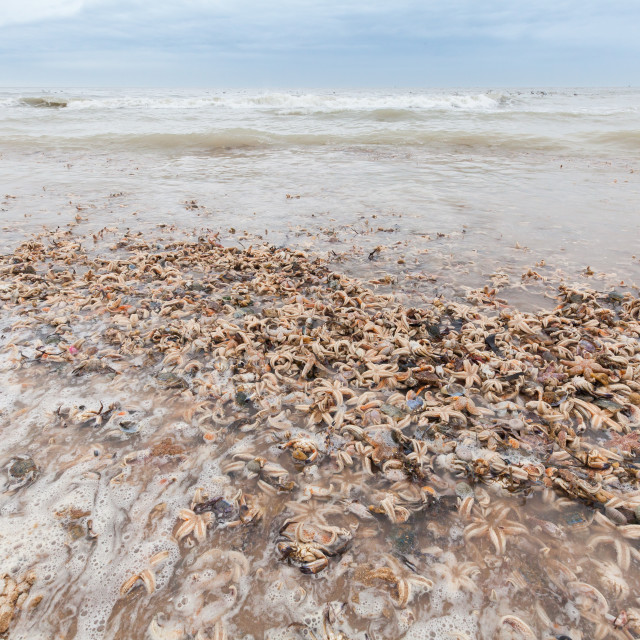 """""""Dead Crustaceans washed up on beach"""" stock image"""