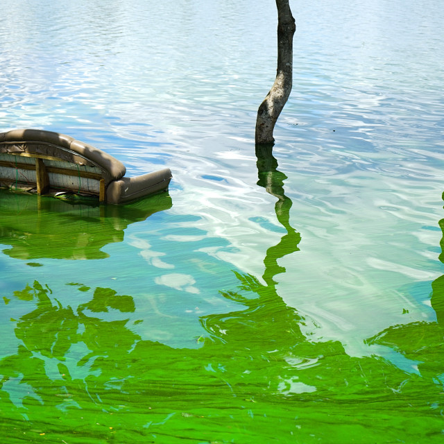 """""""Flood water and pollution"""" stock image"""