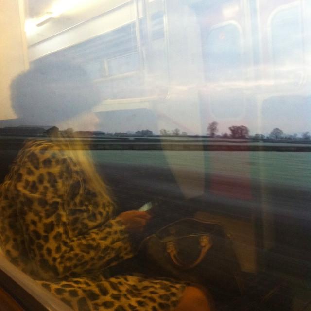 """Leopard skin train reflection"" stock image"