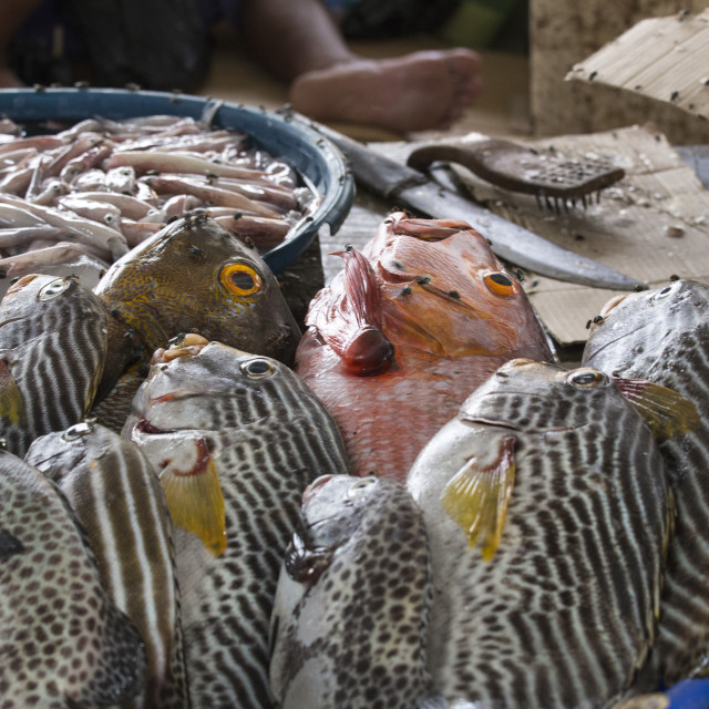 """fish on a market at Flores"" stock image"