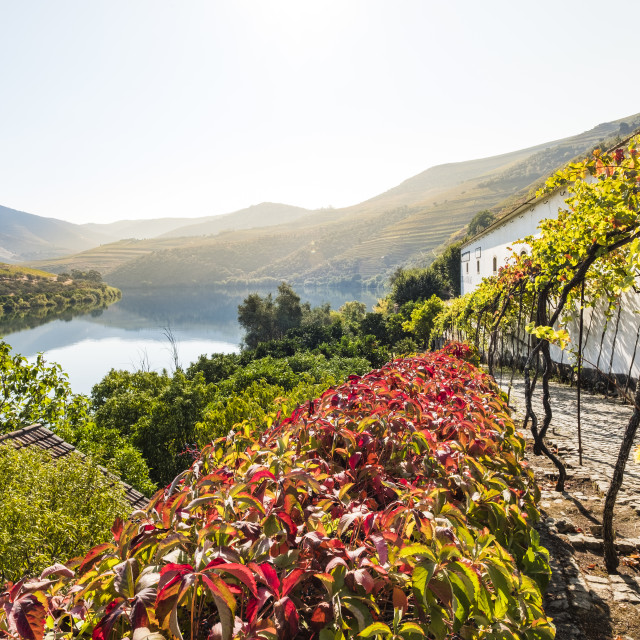 """Landscape in the Douro River, Alto Douro Wine Valley"" stock image"